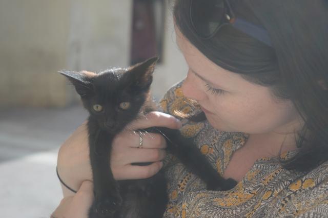 Croatia Split Cat