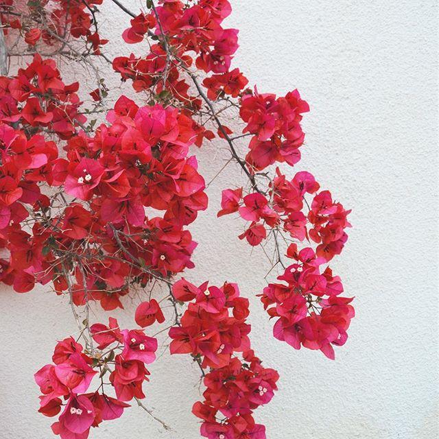flowers vilanova barcelona
